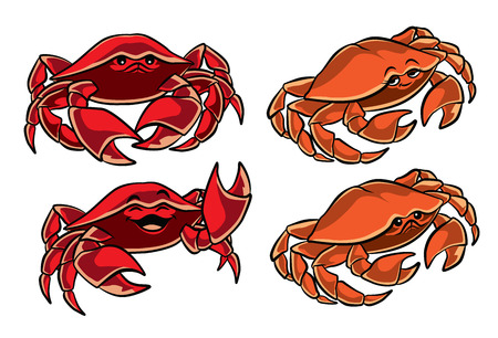Illustration of two cute red and orange crabs