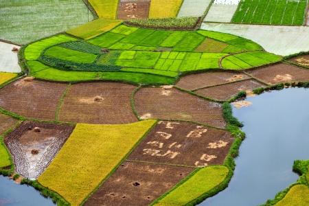 lang: Harvesting Time, Bac Son Valley, Lang son, Vietnam