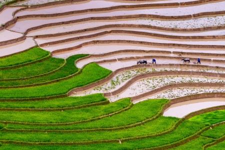 Rice Terraces, Yen Bai province, Vietnam photo