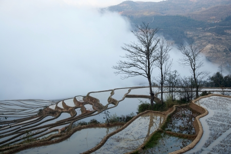 in Yuanyang district, Yunnan province, China photo