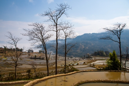 in Yuanyang district, Yunnan province, China photo