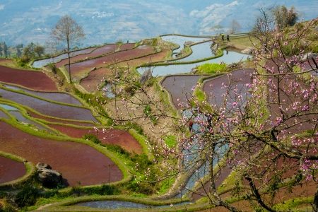 yuanyang: in Yuanyang district, Yunnan province, China