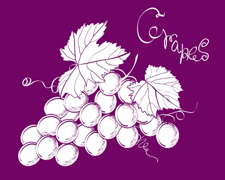 Vector illustration of bunch of the ripe grapes Vector