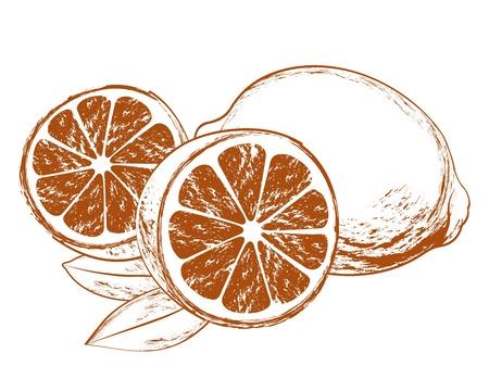 lemon slices: Tasty lemon illustration with leaves on white
