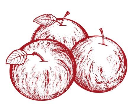Tasty vector apples  illustration isolated on white
