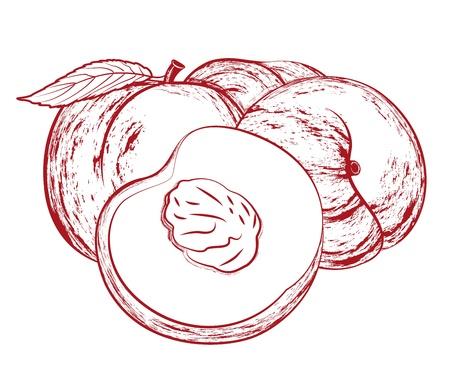 Vector illustratie van smakelijke perziken geïsoleerd op wit