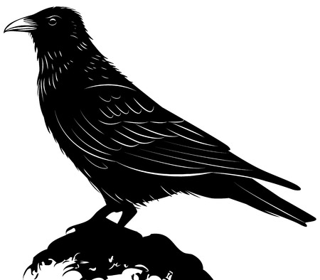 Black vector raven isolated on white background Illustration
