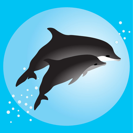 oceanography: Couple dolphins swimming in the ocean vector illustration Illustration