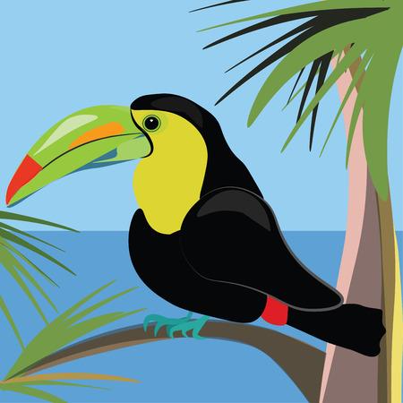 Beautiful toucan bird sitting on a palm tree vector illustration