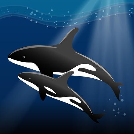 鯨と海で泳ぐ彼女の子牛のベクトル イラスト