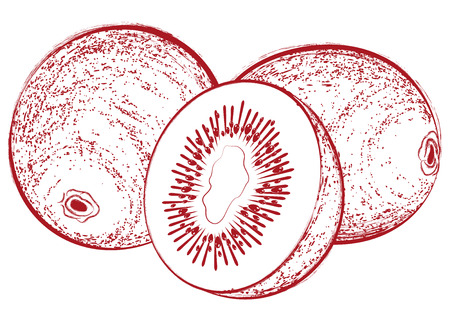 Vintage vector illustration with a fresh delicious cut kiwi