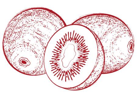 lobule: Vintage vector illustration with a fresh delicious cut kiwi