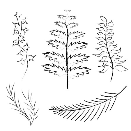 Various branches drawn in pencil and charcoal vector illustration Illustration