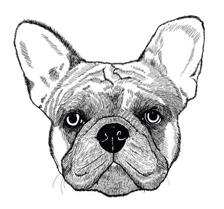 french bulldog: French bulldog, dog illustration in engraving technics