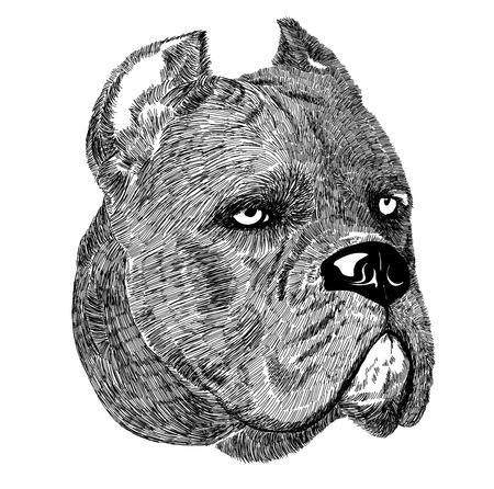 breeder: Cane Corso dog portrait illustration on white