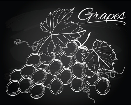 bunch: Vector bunch of grapes on the chalkboard background