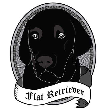 Flat Retriever Portrait. Emblem of a Dog in Black and White