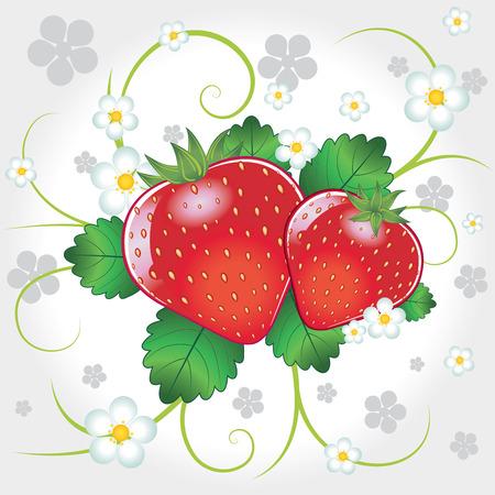 ripe: Fresh sweet ripe strawberries vector illustration composition