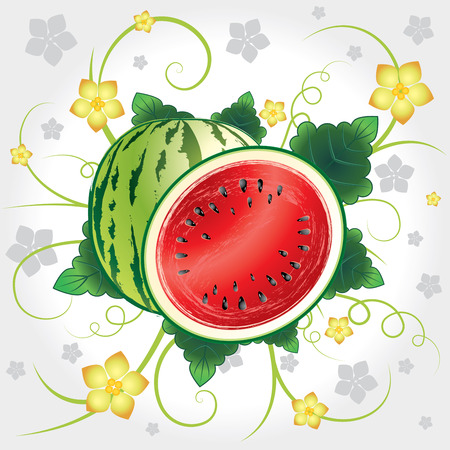 Watermelon whole and slices with leaves and blossom Illustration