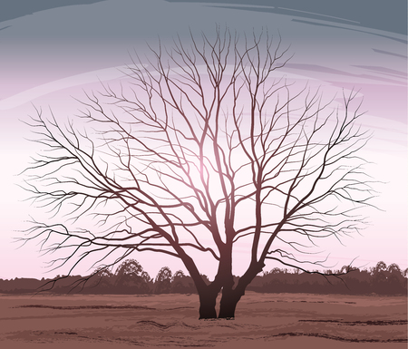 Tree vector illustration landscape oak without leaves.