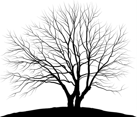 Vector illustration tree. Silhouette oak without leaves Фото со стока