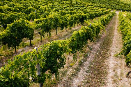 Beautiful valley in Tuscany, Italy. Vineyards and landscape Standard-Bild