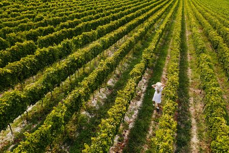 Aerial view of beautiful girl in hat stands on large vineyard plantation. Standard-Bild