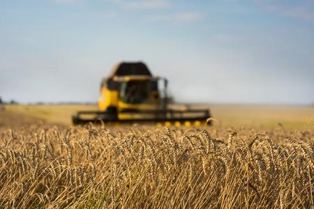 Harvesting wheat crop harvester Stock Photo