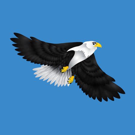 eagle on wing Vector