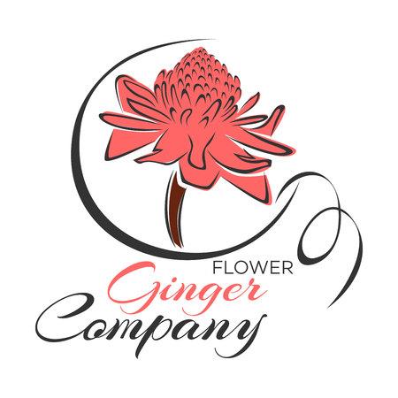 ginger: Ginger Flower icon Illustration