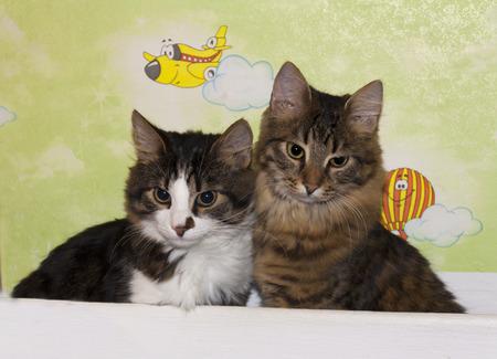 Cats cute couple animal kitty photo  Housecats friends  photo