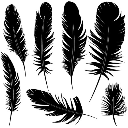 Feather of bird set vector illustration sketch Çizim