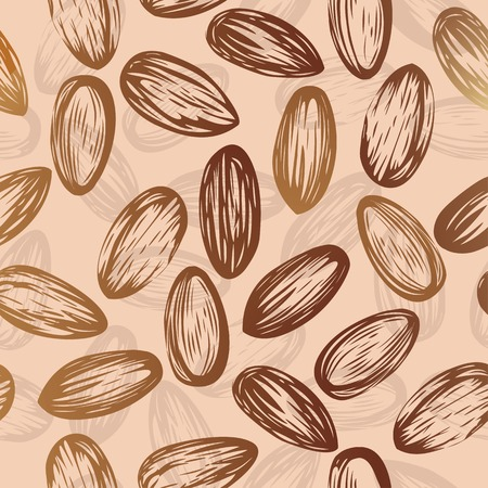 Almonds nut seamless vector background drawing of nuts  edible seeds of the tree, used in animal feed and human