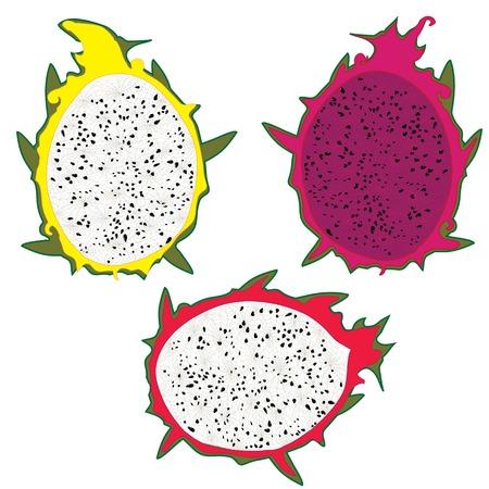 fruit du dragon: Fruit du dragon illustration vectorielle isol� sur fond blanc