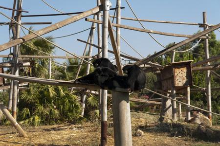 Family of monkey, relatives photo