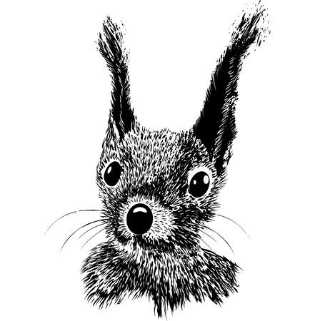 Squirrel head vector animal illustration for t-shirt. Sketch tattoo design.