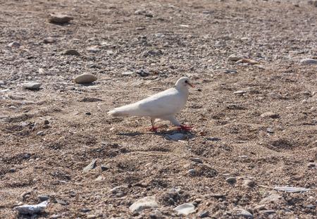 white bird: White bird dove photo