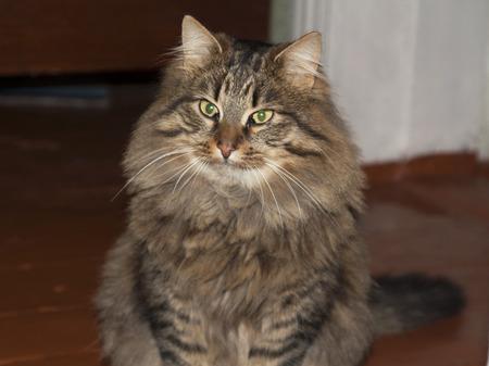 housecat: Cat cute animal kitty photo. Housecat friend. Stock Photo