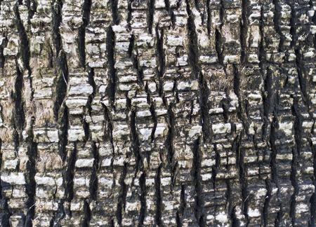 nature photo: Tree bark texture photo Stock Photo