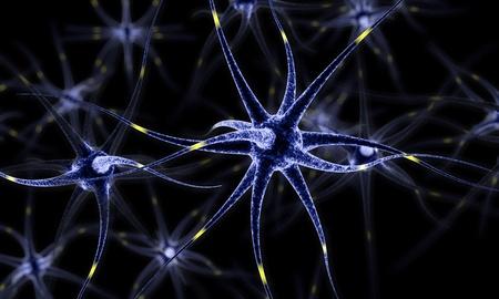 Neural network , Brain cells , Human nervous system , Neurons 3d illustration
