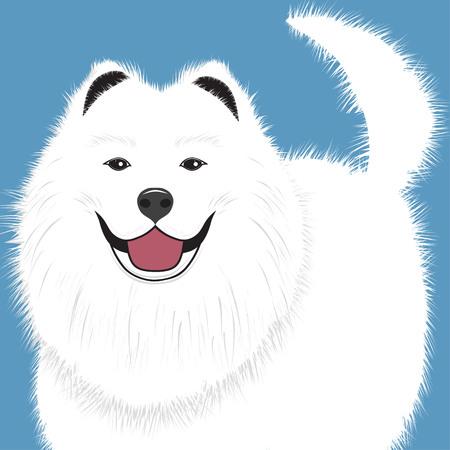 Dog samoyed, buddy puppy vector illustration. Illustration