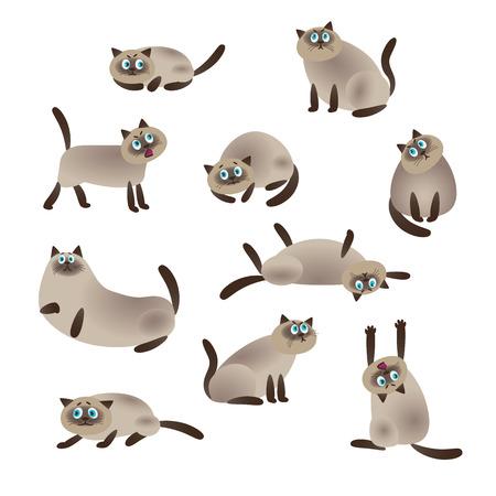 Siamese kat, verzameling vectorillustraties van een platte stijl.