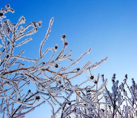 stil: Frosty branches