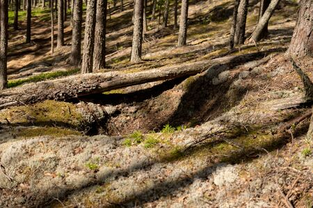 Ditch in a forest