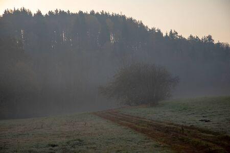Forest in morning fog 写真素材