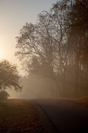 Road through forest in morning fog 写真素材