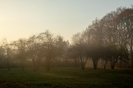 Forest in morning fog Zdjęcie Seryjne