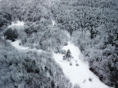 Top view of snow covered trees in the winter 写真素材