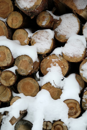 Sawn timber in a forest covered with a layer of snow Zdjęcie Seryjne