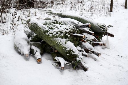 Christmas trees pile